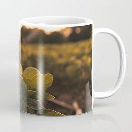 Soybean sunset Coffee Mug