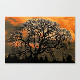Altered Oak 3 Canvas Print