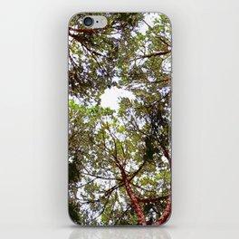 Cielo di alberi iPhone Skin
