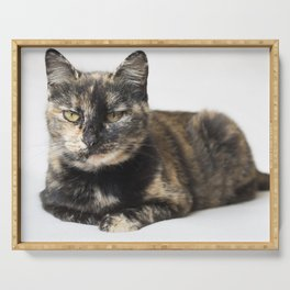Serious Tortoiseshell cat lying down and staring at camera. Serving Tray