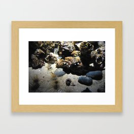 Underwater Rocks Framed Art Print