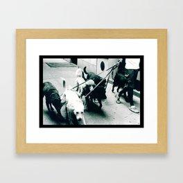 Dog Walker NYC  Framed Art Print