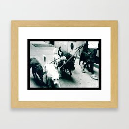 Dog Walker NYC  Framed Art Print