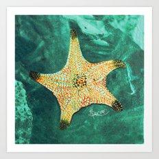 Starfish ~ 2 Art Print