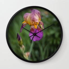 Purple and Yellow Bearded Iris Flowers Blooming in a Spring Garden 1 Wall Clock