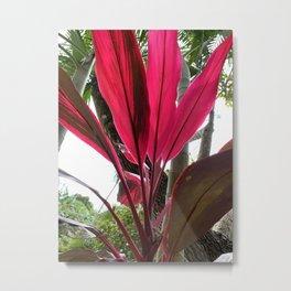 Red Fanning Leaves Metal Print