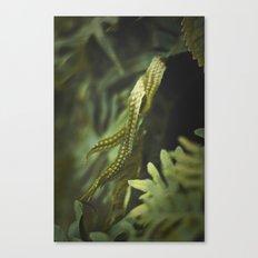Ferm Canvas Print