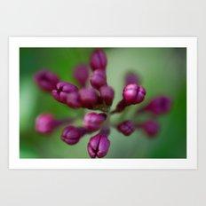 Arboretum Lilac Art Print