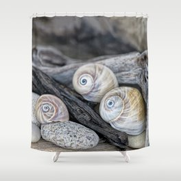 Shark's eye shells and driftwood Shower Curtain