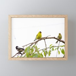 Golden Finch Framed Mini Art Print