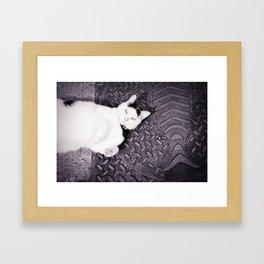 Animal :: Catfish Framed Art Print