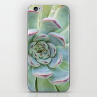 succulent iPhone & iPod Skins featuring Succulent by Tammy Franck