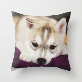 husky puppy. Throw Pillow