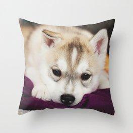 husky puppy. Throw Pillow