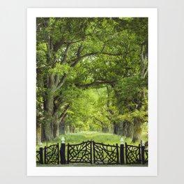 Oak Tree Alley in Summer Art Print
