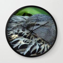 Sleepy mallard duck close-up 2 Wall Clock