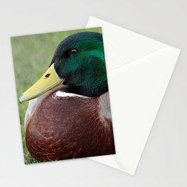 Mallard Drake Stationery Cards