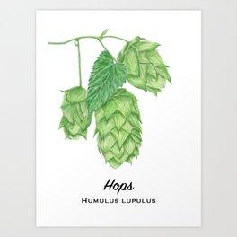 Beer Hops Botanical Painting Art Print