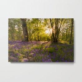 Bluebell Wood MK Metal Print
