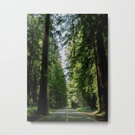 Avenue of the Giants Metal Print
