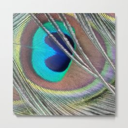 Lonesome Feather Metal Print