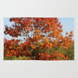 Autumn Colours in Greenwich Park, London Rug