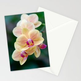 yellow orchid Stationery Cards
