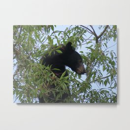 Bearly-Contained Excitement Metal Print