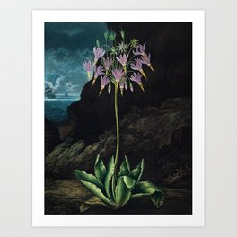 The American Cowslip - The Temple of Flora Art Print