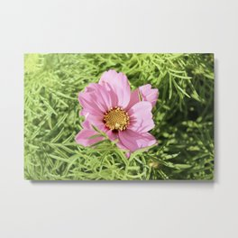 Hidden Pink Flower Vintage Metal Print