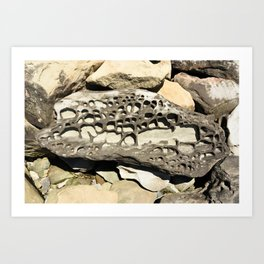 Stone Lace Nugget Washington Boulder Rock Geology Art Print