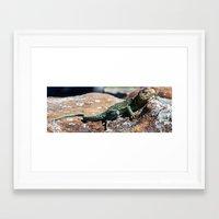 lizard Framed Art Prints featuring Lizard by Christy Leigh