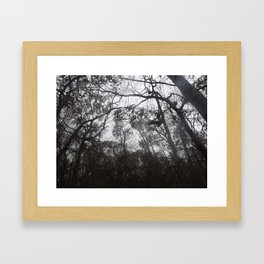 Trees on  a Stormy Day Framed Art Print