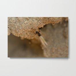 Romantic Ant Metal Print