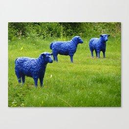 blue sheep Canvas Print