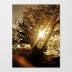 Sunset Behind the Tree Canvas Print