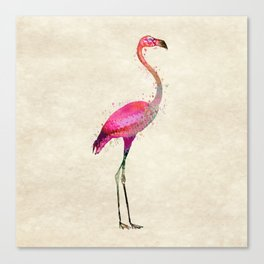 Pink Flamingo Canvas Print