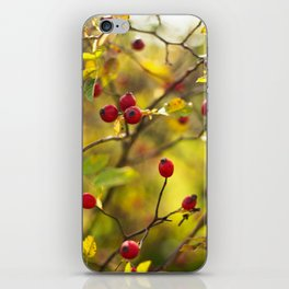 Rosa canina iPhone Skin