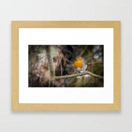 Robin on a Branch Framed Art Print