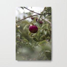 Lonely Apple Metal Print