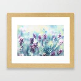 Lavender Summerdreams Framed Art Print