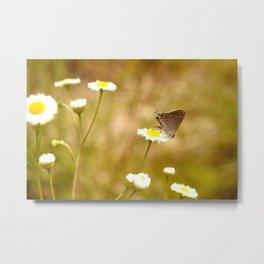 Banded Hairstreak Butterfly  Metal Print