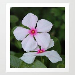 Pink & White Flowers Art Print