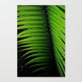 Palm tree leaf - tropical decor Canvas Print