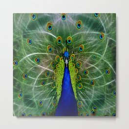 Peacock dreamcatcher Metal Print
