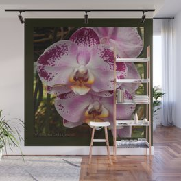 Pink Orchid Blossom from Mexico Wall Mural