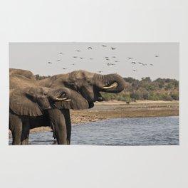 Éléphants, Parc national de Chobe, Botswana // Elephants, Chobe National Park, Botswana Rug