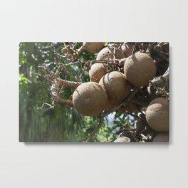 Cannonball Fruit Metal Print