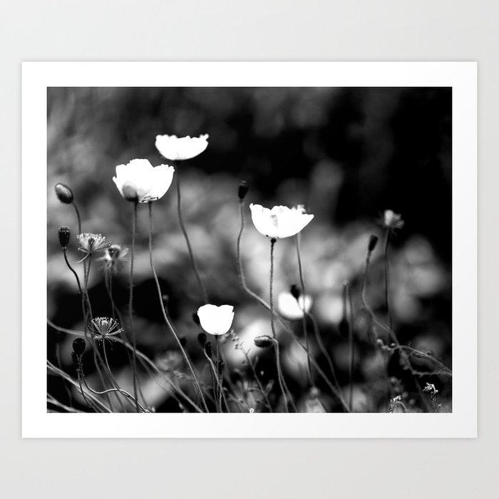 White Poppy Flowers in Black and White #decor #society6 Art Print