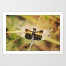 Dragonfly II Art Print